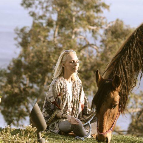 Can you tame a wild horse?